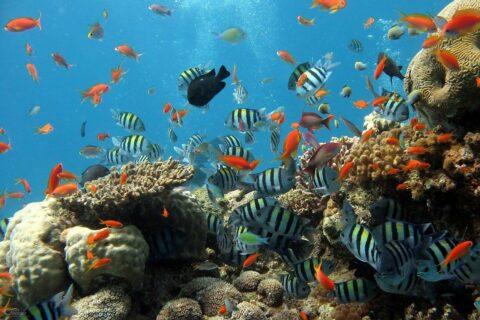 Jaubert-System - Filter im Meerwasser-Aquarium