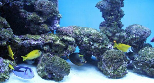 Lebendgestein im Meerwasseraquarium