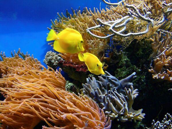 Stickstoffkreislauf im Aquarium